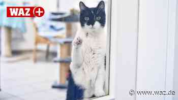 "Tierheim Duisburg: Kaum ""Corona-Tiere"" – aber viele Katzen - WAZ News"
