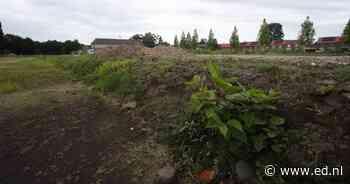 Bouwterrein Deurne wordt afgegraven om Japanse duizendknoop   De Peel   ed.nl - Eindhovens Dagblad