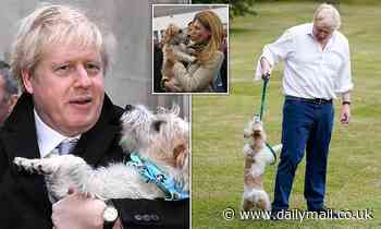 Dilyn the Downing street dog neutered to stop his 'endless romantic urges'