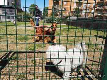 Legnano a 4 zampe: sistemerà le aree cani e ne aprirà una nuova a San Paolo - malpensa24.it