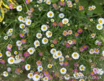 Gardening: Perfect plant to really liven things up
