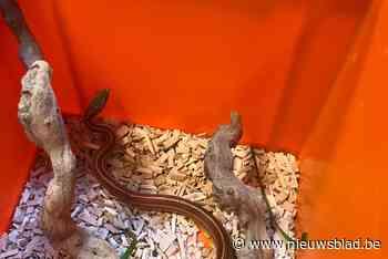 Bewoners vinden slang van 80 centimeter in kelder