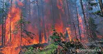 'Mayhem': Severe wildfires could threaten water supply for communities, expert warns