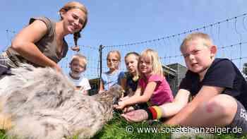 Grundschüler aus dem Kreis Soest lernen den Umgang mit Hühnern - soester-anzeiger.de