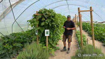 Pfungstadt: Gemüse zum Selbsternten - HIT RADIO FFH