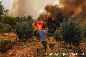 Turkey wildfires: Six now dead and hundreds homeless as devastating toll of disaster becomes clear