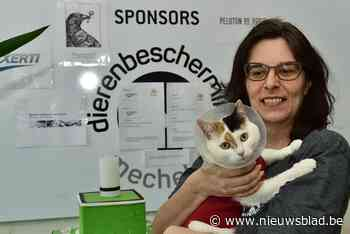 "Mechelse Dierenbescherming krijgt massaal honden en kittens binnen: ""Dweilen met de kraan open"""