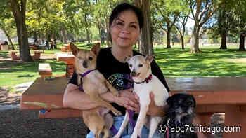Childhood abuse survivor on a mission to save lives of abused animals, find forever homes - WLS-TV