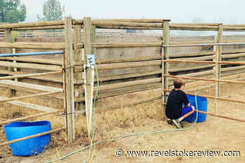 Safe haven for animals evacuated from nearby wildfires set up at North Okanagan ranch – Revelstoke Review - Revelstoke Review