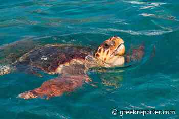 Five Remarkable Marine Animals of Greece (And Where to Find Them) - Greek Reporter - Greek Reporter