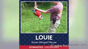 Maryland Zoo animals participate in 'Olympic-inspired' events - FOX 7 Austin