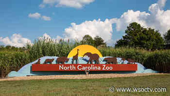 NC Zoo to vaccinate some animals against COVID-19 - WSOC Charlotte