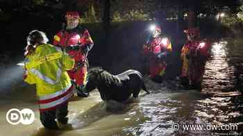 Rescuers bring terrified animals to safety after Germany's floods - DW (English)