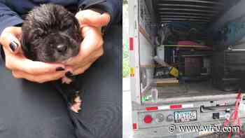'Deplorable conditions': 17 animals 'on the brink of death' rescued from hot U-Haul truck - WFTV Orlando