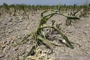 Leeuwenaars kunnen schade aanvragen voor droogte vorige zome... (Zoutleeuw) - Het Nieuwsblad