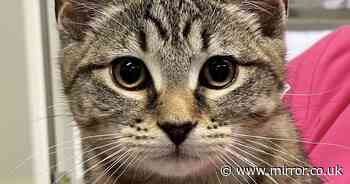 Kitten almost blinded when she swallowed a sewing needle in freak accident