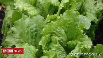 Salad firm staff self-isolating after Evesham Covid-19 outbreak