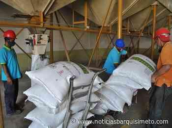 En Guárico garantizan producción de semillas nacional de arroz - Noticias Barquisimeto