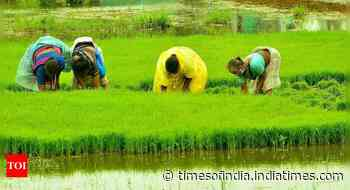 Kharif sowing hits 'normal' level as rainfall deficit dips