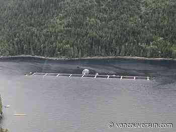 DFO report suggests alternatives to open-net salmon farms in B.C., but next step unclear