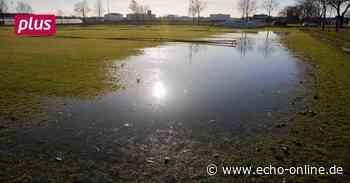 Ernteausfälle in Lampertheim nach Starkregen - Echo Online