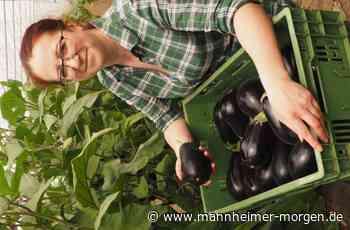 Gemüse hat es unter Folie gern warm - Mannheimer Morgen