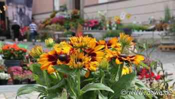 Stadtrat Cham: Am 5. September verkaufsoffener Sonntag - idowa