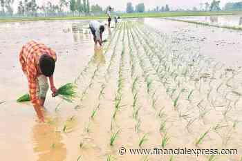 Monsoon revival: Sowing picks up in major crop-producing states
