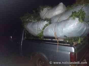 San Pedro: secuestraron siete ponchadas de yerba mate robadas de la propiedad de un agricultor - Noticiasdel6.com