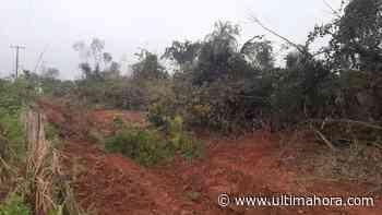 San Pedro: Galopante deforestación para expansión del cultivo de soja - ÚltimaHora.com