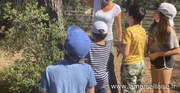Les cigales provençales à l'Écomusée de Gardanne - Journal La Marseillaise