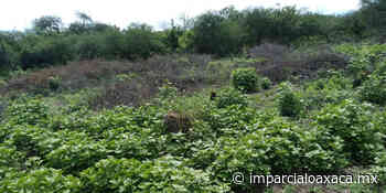 Despojan a adulta mayor de terreno en Santa Ana Zegache - El Imparcial de Oaxaca