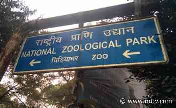 Delhi Zoo Reopens After Being Temporarily Shut During Second Covid Wave - NDTV