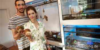 Schnecken-Züchter aus Dorsten sind am 1. August im NDR zu sehen - Münsterland Zeitung