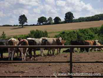 Benefits of walks in the Herefordshire countryside highlighted