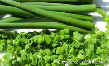 Tutte le incredibili proprietà di questa erba aromatica che depura i reni pulendo il sangue - Proiezioni di Borsa