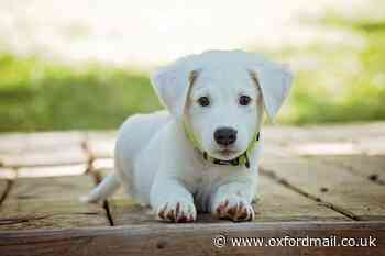 Cherwell District Council issues illegal puppy dealer warning