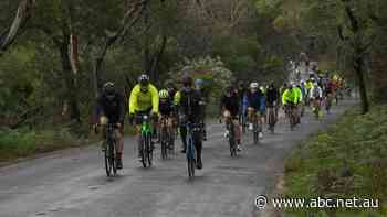 Tasmania's Tour de Mo charity bike ride event called off, as cycling group lashes 'appalling' drivers - ABC News