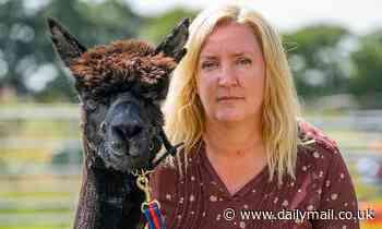Alpaca's carer calls on Boris Johnson to intervene as animal to be put down following legal battle