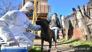 Vacunación veterinaria gratuita en San Carlos - Impulso Baires