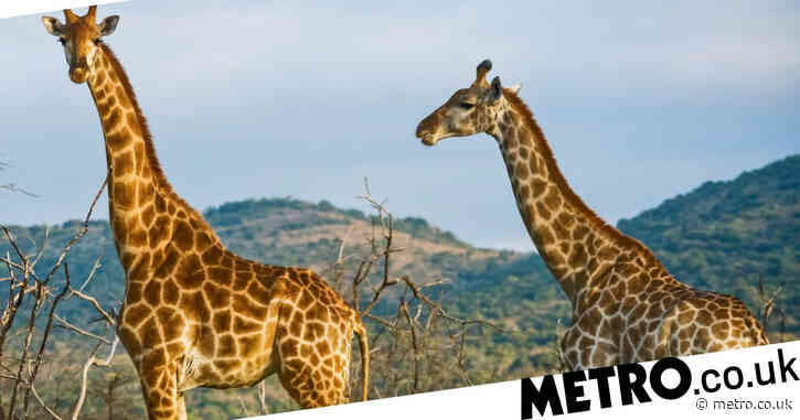 Win a nine day camping safari trip for two to Kenya – flights included
