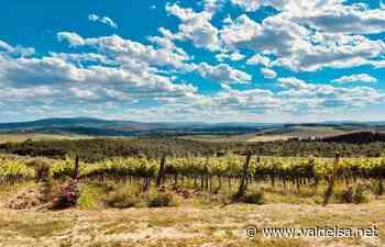 Castellina in Chianti confermata fra le Spighe Verdi per il sesto anno   Valdelsa.net - Valdelsa.net