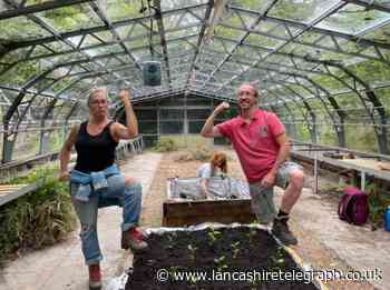 Witton Park greenhouse renovation project growing well