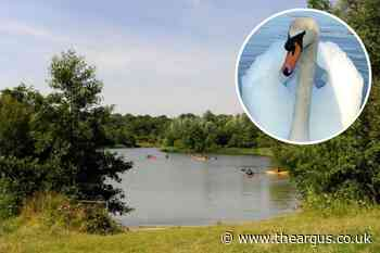 Swan shot dead in Horsham park