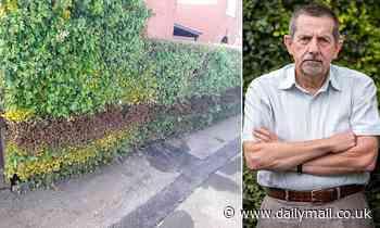 Broadband workmen leave 23ft scorch mark on beloved 90-year-old hedge