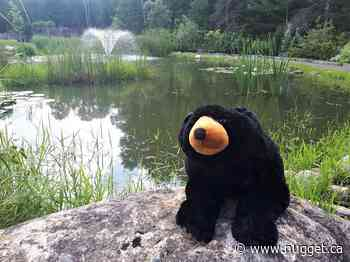 Adventures of Pete the Bear popular with village locals