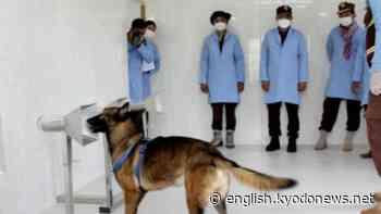 Cambodian mine detection dogs trained to detect coronavirus - Kyodo News Plus