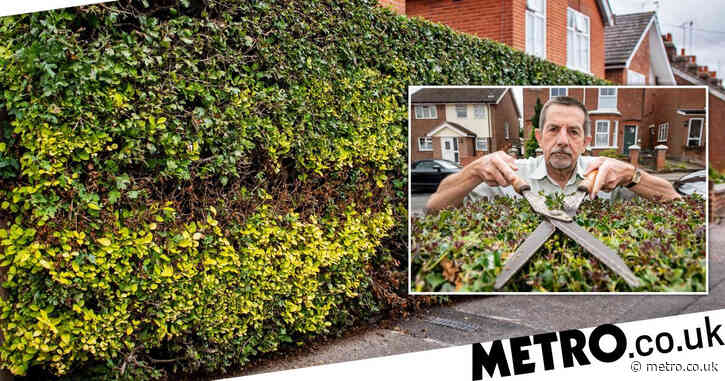 Hedge row after workers burnt massive strip out of gardener's perfect bush