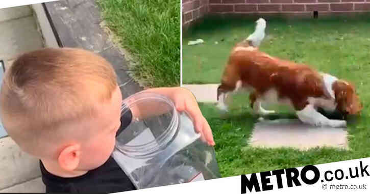 Child releases butterfly he'd raised from a caterpillar and dog immediately eats it