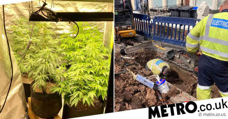 Nearly 200 homes suffer power outage sparked by huge cannabis farm